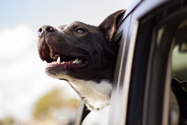 Czy jazda z twoim zwierzakiem jest legalna?