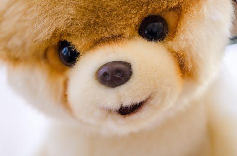 Boo, Najsłynniejszy pies w internecie zmarł
