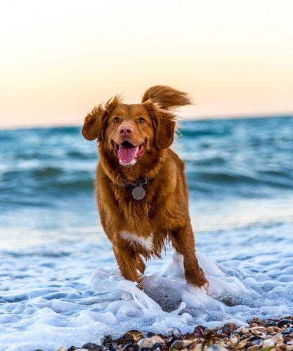 Kałuże mogą sprawić, że twój pies zachoruje