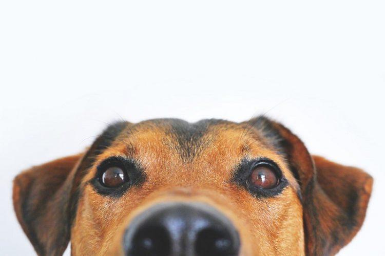 Posiadanie psa może przyczynić się do dłuższego życia